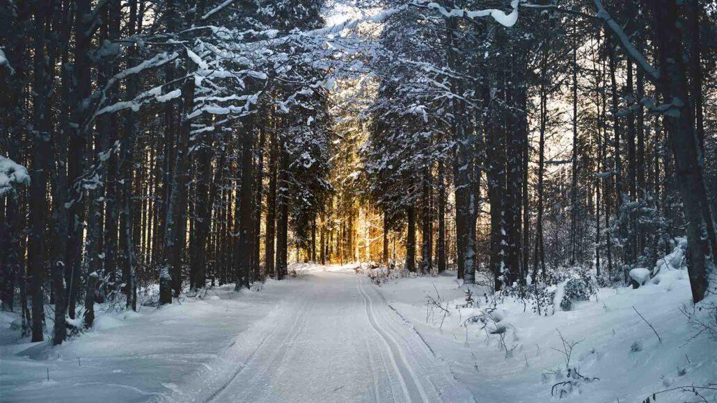 Vintervej i danmarks skove - perfekt til at blive vinterklar med vinterdæk