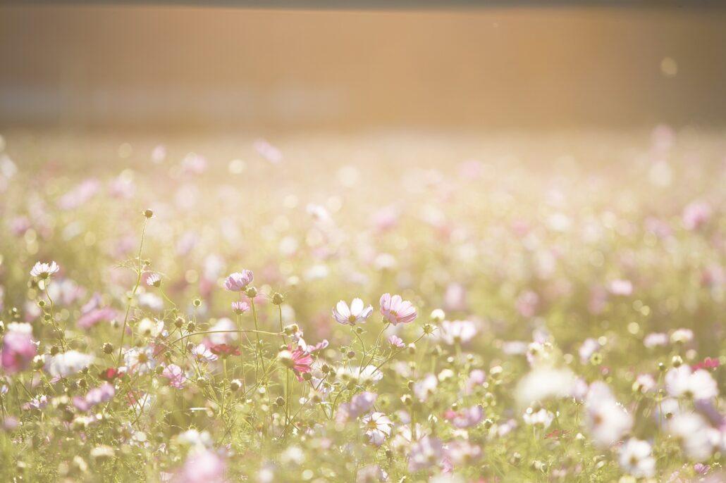 sommerblomster på en mark